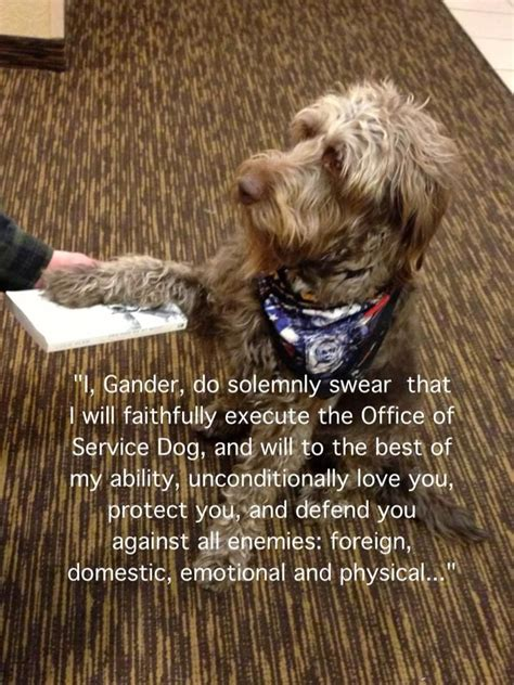 image result   service dog quotes quotes dogs