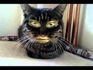 Cat with a human face - YouTube