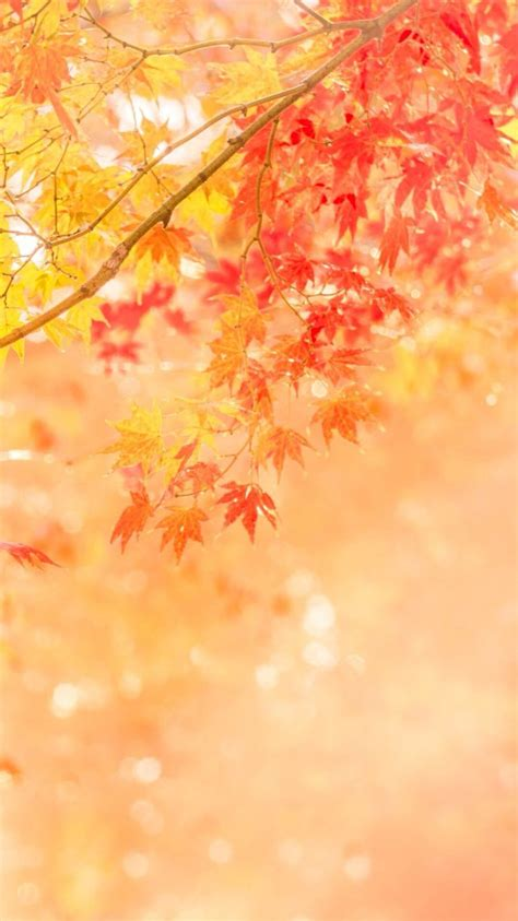 Fall Themed Wallpaper Iphone by Fall Iphone Wallpaper Themes Wallpaper