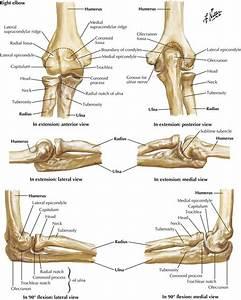 6  Upper Limb