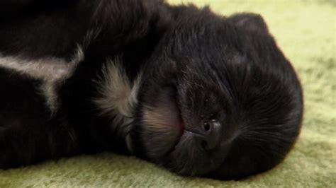 cute puppies  cute puppy piles  cute animal