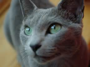 gray cat the charmed gray cats in history