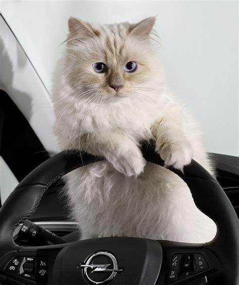 Katze Von Karl Lagerfeld