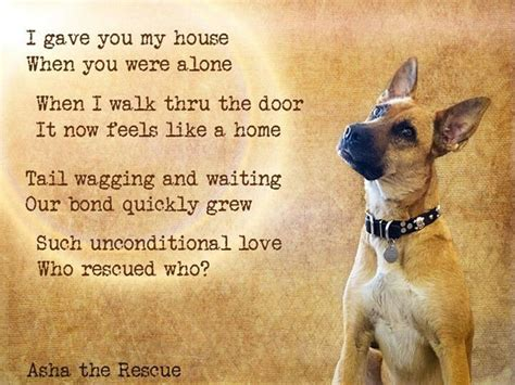 rescue dog quotes ideas  pinterest rescue