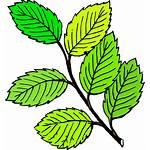 Leaves Clip Clipart Onlinelabels Tom