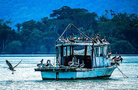 Pelican Boats Belize by 23 Best Honduras Mi Querido Pais Images On