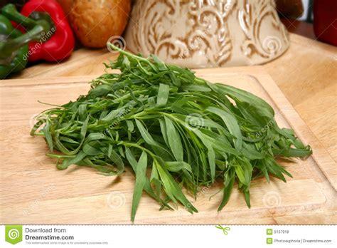 estragon cuisine estragon frais photo stock image du nourriture sorcière