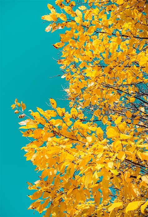 Only the best aesthetic wallpapers. autumn colors II in 2019 | Floral wallpaper iphone, Iphone ...