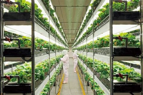 Vertical Farming, Plant Factory Market Shares To
