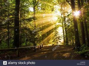 Schöne Bilder Kaufen : sch ne natur landschaft gold sonnenlicht durch die b ume bayerischer wald nationalpark wald ~ Orissabook.com Haus und Dekorationen