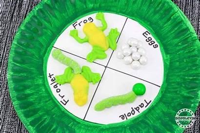 Frog Craft Activity Lifecycle Crafts Activities Preschoolers