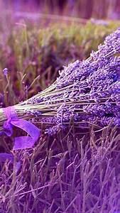 Plant De Lavande : 1000 images about lavande lavender on pinterest ~ Nature-et-papiers.com Idées de Décoration