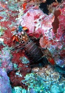 Three isn't enough? A dozen photoreceptor types in Mantis ...