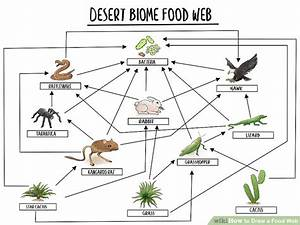 Draw A Food Web In 2020