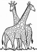 Giraffe Coloring Pages Templates Template Colouring Pdf sketch template