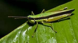 Insects  U2013 Anaconda Lodge Ecuador