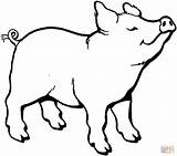 Pig Coloring Colorear Dibujos Printable Pigs Colouring Sheets Clipart Animal Cif Dibujo Muddy Huele Cerdito Algo Clip Drawings Smells Something sketch template