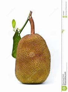 Jack Fruit On White Background Stock Image - Image: 19620807