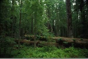Free Picture  Scenic  Forest  Habitat