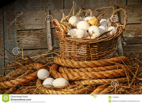 basket  eggs  straw stock photo image  agriculture