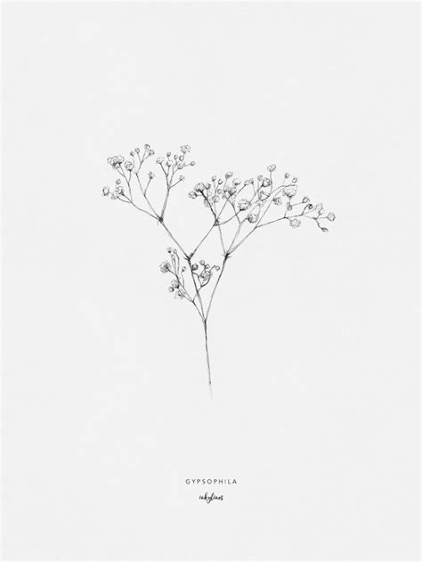 Flowers - Gypsophila   Baby breath tattoo, Drawings, Babys