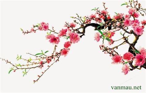 ảnh đẹp về hoa đào hình nền hoa đào hoa đào đẹp nhất