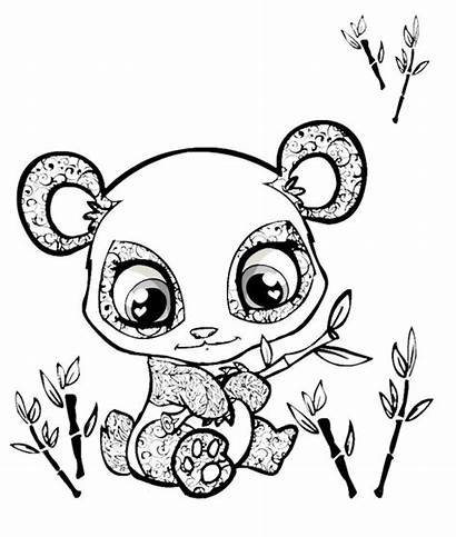 Animals Coloring Pages Animal Owl Panda