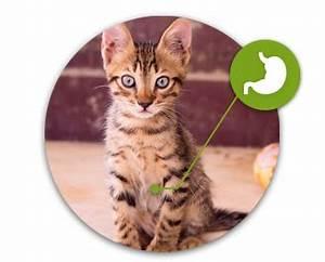 Graine Herbe A Chat : herbe chat graines herbe chat ~ Melissatoandfro.com Idées de Décoration