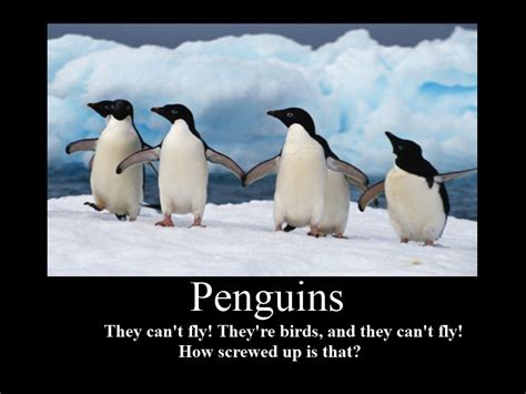 inspirational quotes  penguins quotesgram