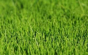 wallpapers: Grass Wallpapers