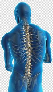 Low Back Pain Pain Management Human Back Spinal Disc