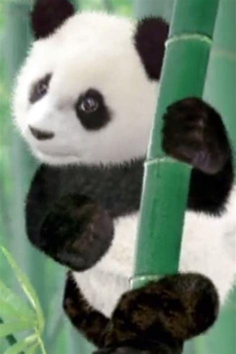 pets se save  panda save