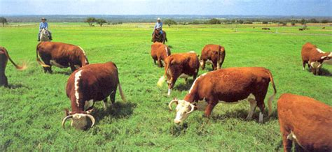 ranching  lbj  lyndon  johnson national