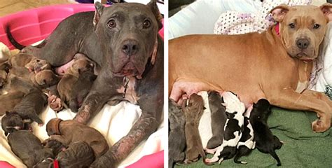 Pregnant Dogs Trapped In Basement Would Have Lost All