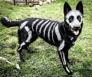 33 pets halloween costumes flaunt unique halloween style dogs cats