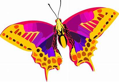 Colorful Clipart Butterfly Abstract Insect Clip Vector