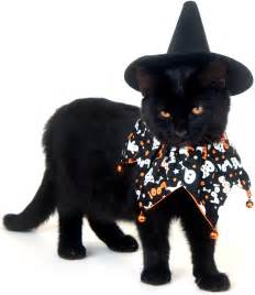 cat costumes pet costumes for you and your pet cityway