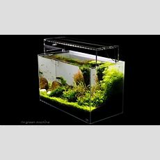 Aquascape Tutorial Guide By James Findley & The Green