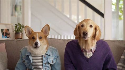 Resolve Pet Expert TV Commercial, 'Max and Cooper' - iSpot.tv