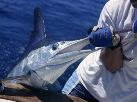 Head Boat Deep Sea Fishing Carolina Beach Nc by Wusstest Du Dass Schwertfische Ihre Augen Heizen