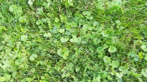 Pflanzen Im Garten Erkennen by 30 Frisch Unkraut Erkennen Garten App Das Beste