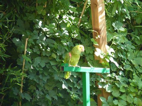 Jardin Aux Oiseaux D Upie by Le Jardin Aux Oiseaux D Upie Partie 8 Perruches