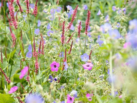 Garten Und Landschaftsbau Blume Hamburg by Sabrina Rothe Focus On Garden Photography Plant