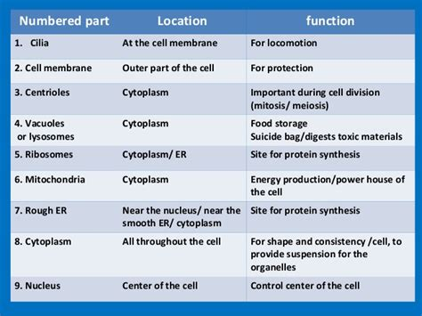 animal cell parts  functions driverlayer search engine