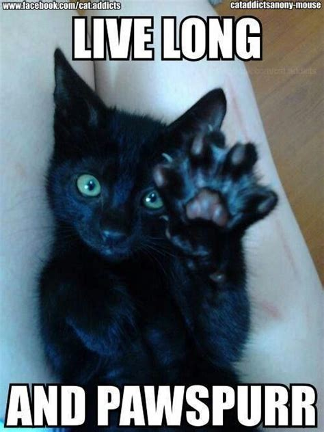 Funny Black Cat Memes - live long and pawspurr cat meme lolcat memes funny pics pinterest cat animal and