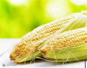 Кукурузные рыльца геморрой
