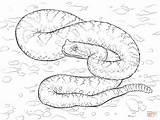 Desert Coloring Pages Sidewinder Viper Sonoran Drawing Sahara Snakes Animals Printable Clipart Snake Gaboon Pit Print Animal Sketch Worksheets Arizona sketch template