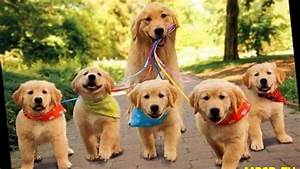 Top 20 Super Happy Dogs Families And Cuts Puppys In The ...
