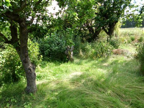 Einen Verwilderten Garten Wieder Herrichten » Gartenbobde