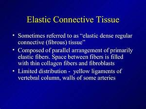 Connective Tissue 2013